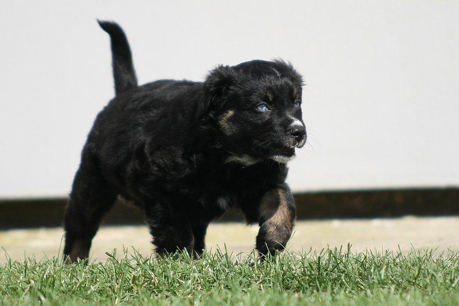 Welpen-Puppies